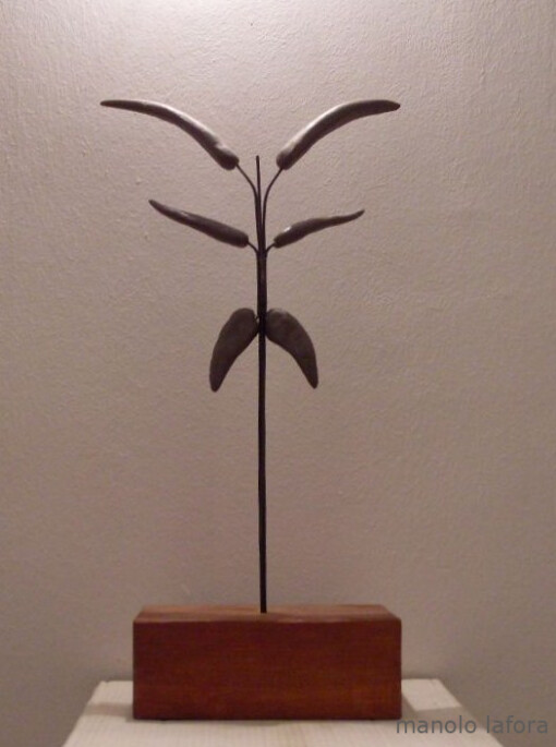 arbol de rocha. by m.lafora.