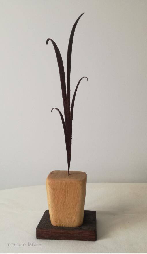 chlorophytum. by manolo lafora.